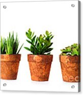 3 Indoor Plants Acrylic Print by Boon Mee