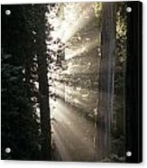 Jedediah Smith Redwoods State Park Redwoods National Park Del No Acrylic Print