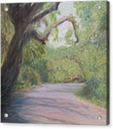 Kingsley Plantation Road Acrylic Print