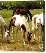 Line Dancing At The Coral Acrylic Print by Claudette Bujold-Poirier