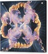 Moon Jellyfish Acrylic Print