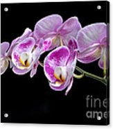 Moon's Orchid  Acrylic Print