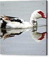 Muscovy Water Reflection Acrylic Print