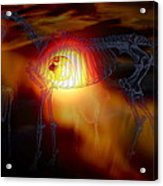 3 Of 4 Horses Acrylic Print
