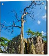 Old And Ancient Dry Tree On Top Of Mountain Acrylic Print