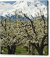 Orchard And Mount Hood, Oregon Acrylic Print