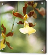 Orchids Dance Acrylic Print