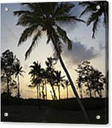 Palm Trees And Sunset Acrylic Print