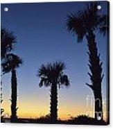 Carolina Palm Sky Acrylic Print