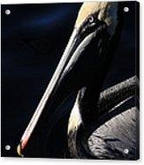 Pelican Profile Acrylic Print
