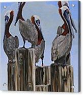 Pelicans Five Acrylic Print