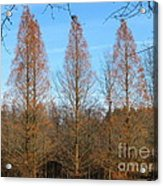 3 Pines Acrylic Print