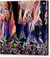 Plm Of Crystals Of Testosterone Acrylic Print