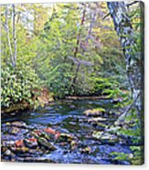 Pocono Mountain Stream Pennsylvania Acrylic Print