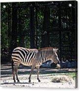 Riverbanks Zoo Columbia Sc Acrylic Print