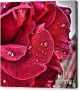 Red Rose And Summer Rain Acrylic Print