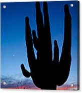 Saguaro Silhouette Acrylic Print