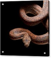 Savu Python On Tree Branch Acrylic Print