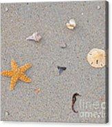 Sea Swag - Natural Acrylic Print