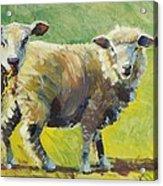 Sheep Painting Acrylic Print