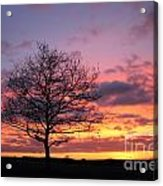Spectacular Sunset Epsom Downs Surrey Uk Acrylic Print