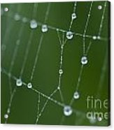 Spider Web With Dew Drops  Acrylic Print