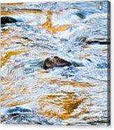 Stream Great Smoky Mountains Painted Acrylic Print