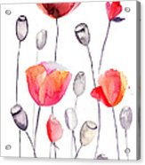 Stylized Poppy Flowers Illustration  Acrylic Print