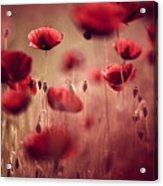 Summer Poppy Acrylic Print