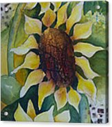 3 Sunflowers Acrylic Print
