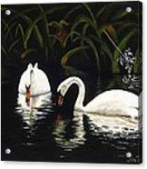 Swans II Acrylic Print