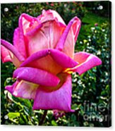 The Pink One Acrylic Print