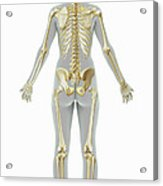 The Skeleton Female Acrylic Print