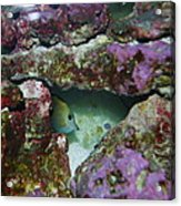 Tropical Fish In Cave Acrylic Print