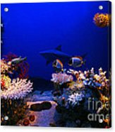Underwater Scene Acrylic Print