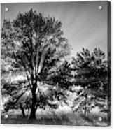 Usa, Tennessee, Great Smoky Mountains Acrylic Print