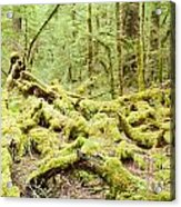 Virgin Rainforest Wilderness Of Fiordland Np Nz Acrylic Print