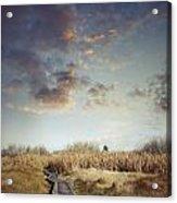 Wetland Walk Acrylic Print