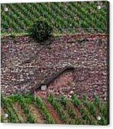 Wine Of Rhine Acrylic Print