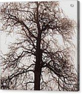 Winter Tree In Fog Acrylic Print