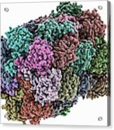 Yeast Enzyme, Molecular Model Acrylic Print by Science Photo Library