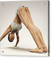 Yoga Downward Facing Dog Pose Acrylic Print