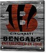 Cincinnati Bengals Acrylic Print