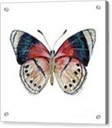 30 Perisama Vaninka Butterfly Acrylic Print