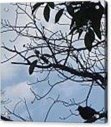 Camera Peak Thru Nature Buy Faa Print Products Or Down Load For Self Printing Navin Joshi Rights Man Acrylic Print