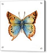 33 Opal Copper Butterfly Acrylic Print