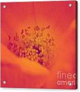 Spring 2013 Acrylic Print