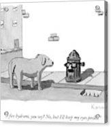 A Fire Hydrant Acrylic Print