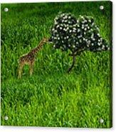 3545 Acrylic Print