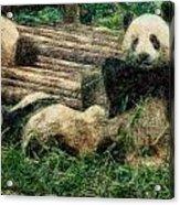 3722-panda -  Colored Photo 2 Acrylic Print